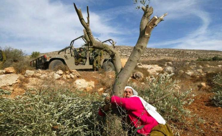 Overview November 2020 | Palestinian olives, the forbidden fruits